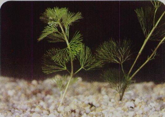 301 moved permanently for Plantas de acuario